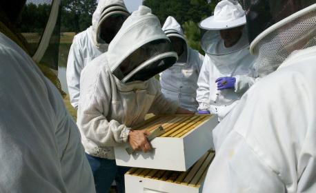 Formez-vous aux fondamentaux de l'apiculture